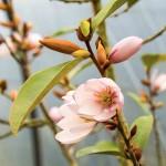 fete-plante-andel-fleur-mars-2016-150x150