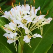 cdf_marche_plantes_2017_jardin_tropical_b