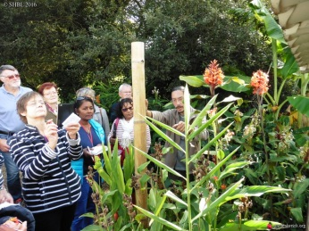 cdf_marche_plantes_2017_jardin_tropical_f
