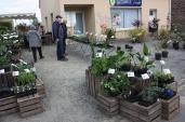 marche_aux_plantes_2017_28_roche_st_louis_0578