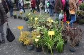 marche_aux_plantes_2017_5_denantois_0252