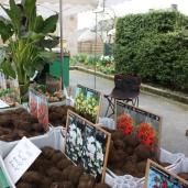 marche_aux_plantes_2017_bulbes_0415