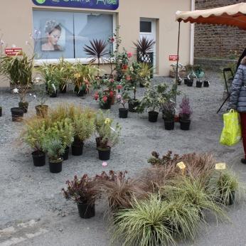 marche_aux_plantes_2017_canal_0462