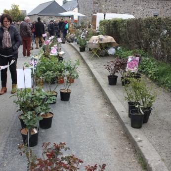marche_aux_plantes_2017_rosiers_cote_emeraude_0610