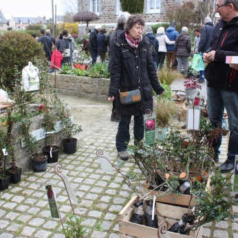 marche_aux_plantes_2017_11_hulotte_0298