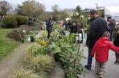 marche_aux_plantes_2017_12_natural_gardens_0299