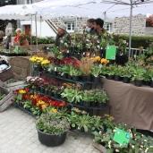 marche_aux_plantes_2017_20_barnhaven_0364