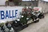marche_aux_plantes_2017_21_jardin_roscoff_0371