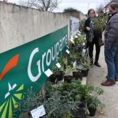 marche_aux_plantes_2017_21_jardin_roscoff_0372