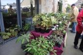 marche_aux_plantes_2017_24_vertige_0386