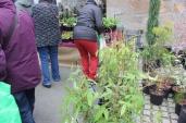 marche_aux_plantes_2017_24_vertige_0388