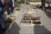 marche_aux_plantes_2017_30_jardin_dherbes_0558