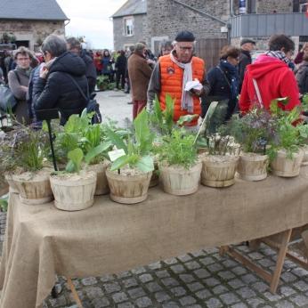 marche_aux_plantes_2017_30_jardin_dherbes_0562