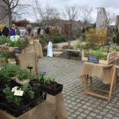 marche_aux_plantes_2017_30_jardin_dherbes_0563