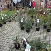 marche_aux_plantes_2017_32_vieilles_forges_0573