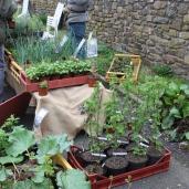 marche_aux_plantes_2017_3_simple_jardin_0239