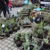 marche_aux_plantes_2017_44_criste_marine_0657