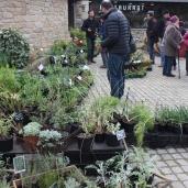 marche_aux_plantes_2017_45_jardin_gwen_0660