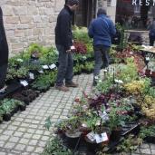 marche_aux_plantes_2017_45_jardin_gwen_0661