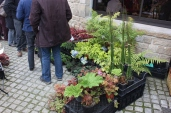 marche_aux_plantes_2017_45_jardin_gwen_0666