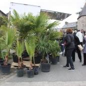 marche_aux_plantes_2017_16_palmeraie_0324