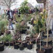 marche_aux_plantes_2017_25_leclercq_0402