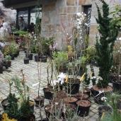 marche_aux_plantes_2017_25_leclercq_0409