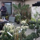 marche_aux_plantes_2017_42_penthievre_0632