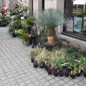 marche_aux_plantes_2017_42_penthievre_0636