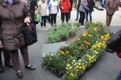marche_aux_plantes_2017_43_delhommeau_0645
