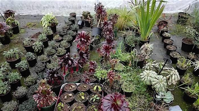 of_marche_aux_plantes_20180315_b