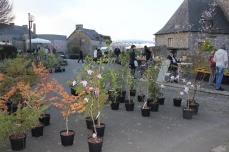 marche_plantes_20180318_07_botaniques_armoricaine_8199