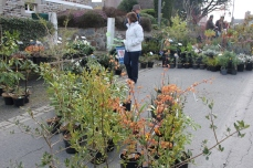 marche_plantes_20180318_12_natural_gardens_8244