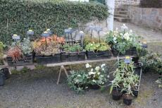 marche_plantes_20180318_12_natural_gardens_8245