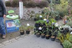 marche_plantes_20180318_12_natural_gardens_8246