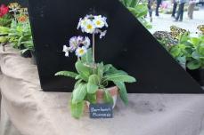 marche_plantes_20180318_18_barnhaven_8285