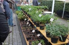 marche_plantes_20180318_28_jardin_ecoute_pleut_8351