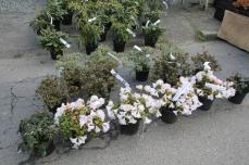 marche_plantes_20180318_30_pepiniere_du_canal_8385