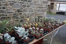 marche_plantes_20180318_36_cactuseraie_creismeas_8613