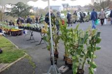 marche_plantes_20180318_02_jardin_tropical_8165