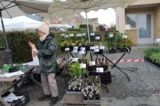 marche_plantes_20180318_29_jardin_st_louis_8379