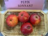 Pepin_Sonnant