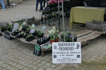 cdf_marcheregionalauxplantes_20220321_05_bernhaven_3261
