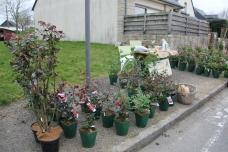 cdf_marcheregionalauxplantes_20220321_21_rose_cote_emeraude_3359