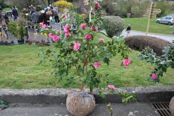 cdf_marcheregionalauxplantes_20220321_36_botanique_armoricaine_3197